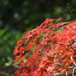 和歌山県みなべ町の紅葉について